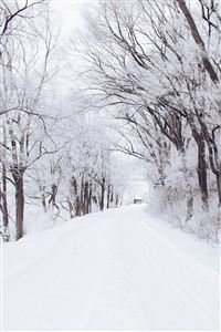 Winter Road Romantic Nature Snow White iPhone 4s wallpaper