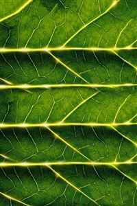 Leaf Texture iPhone 4s wallpaper
