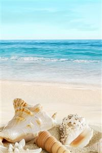Nature Sunny Sea Shell Beach iPhone 4s wallpaper