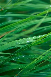Grass Blades Iphone 4s Wallpapers Free Download