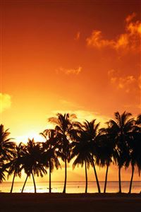 Palm Trees iPhone 4s wallpaper