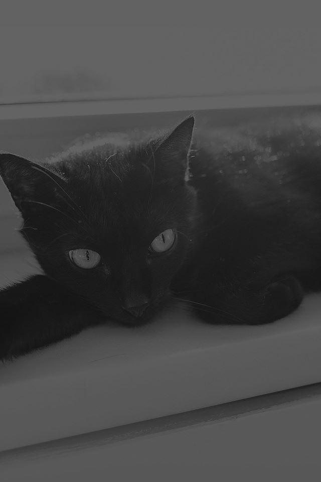 Black Cat Animal Cute Watching Dark Bw Iphone 4s Wallpaper Download