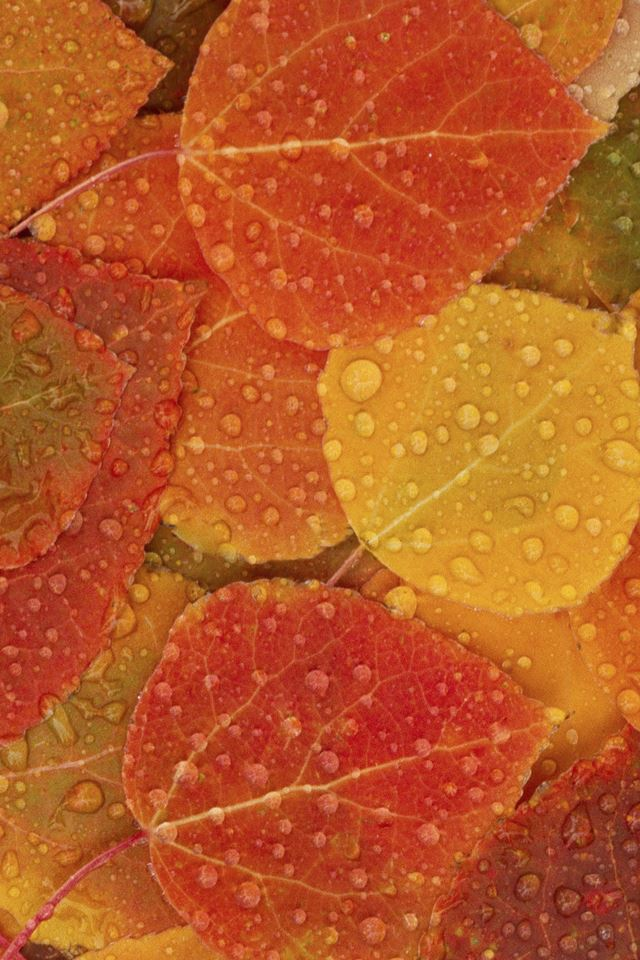 Autumn Leaves iPhone 4s wallpaper