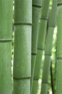 Green Bamboo iPhone 4s wallpaper