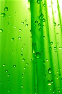 Green Drops iPhone 4s wallpaper