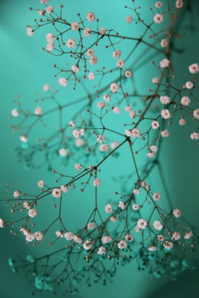Pretty little Flowers iPhone 4s wallpaper