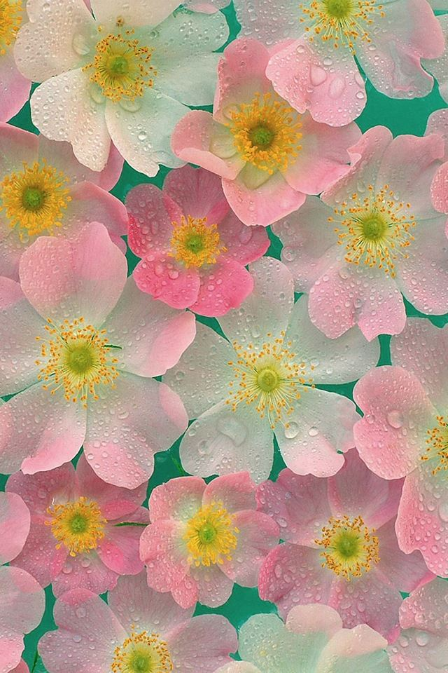 Matte finish petals iPhone 4s wallpaper