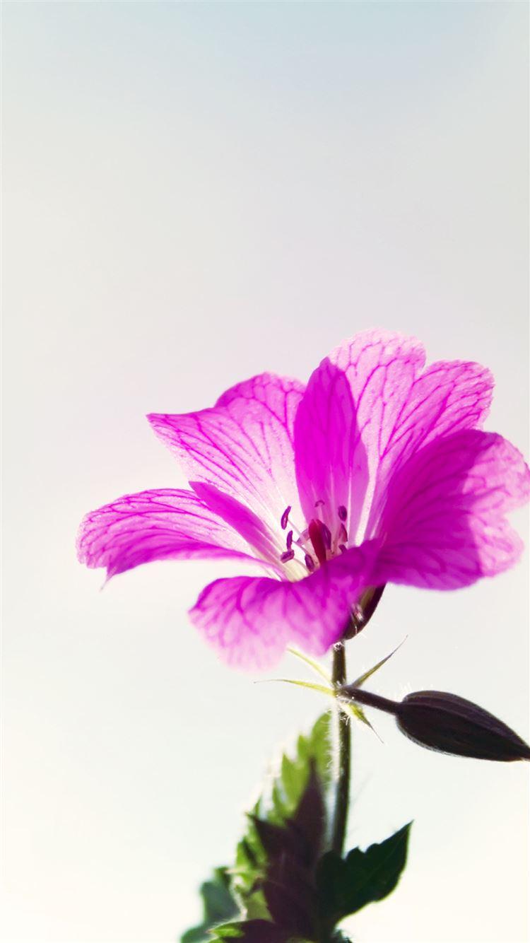 little purple flower macro iphone 8 wallpaper download | iphone