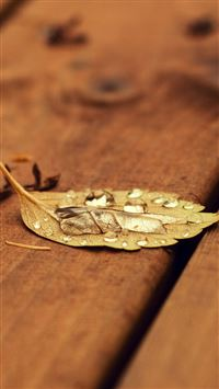 Fallen Leaf On Wooden Chair iPhone 6(s)~8(s) wallpaper
