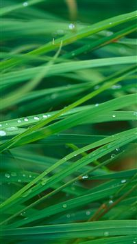Green Dew Grass Leaf  iPhone 6(s)~8(s) wallpaper