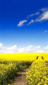Blue Sky Canola Flower Garden iPhone 6(s)~8(s) wallpaper