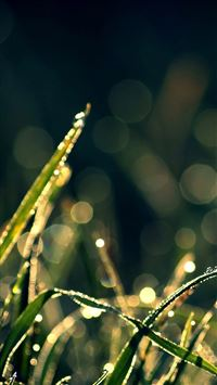 Bokeh Green Grass Drops iPhone 6(s)~8(s) wallpaper