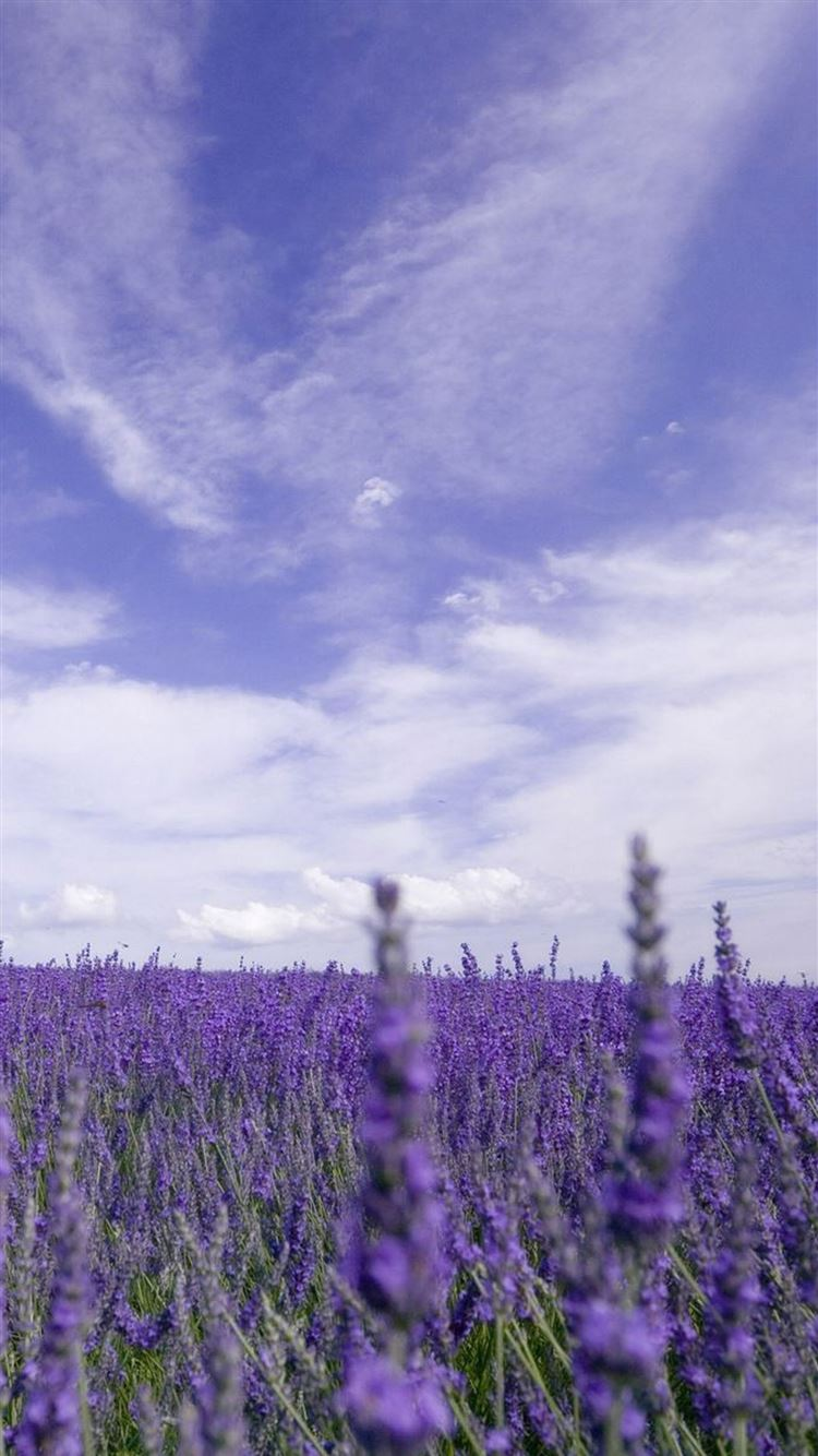 Nature Purple Lavender Garden Iphone 8 Wallpapers Free Download