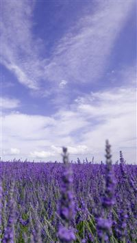 Nature Purple Lavender Garden iPhone 6(s)~8(s) wallpaper