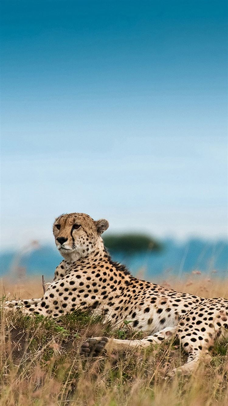 South Africa Leopard Iphone 8 Wallpapers Free Download