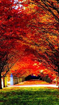 Nature Red Trees Road iPhone 6(s)~8(s) wallpaper