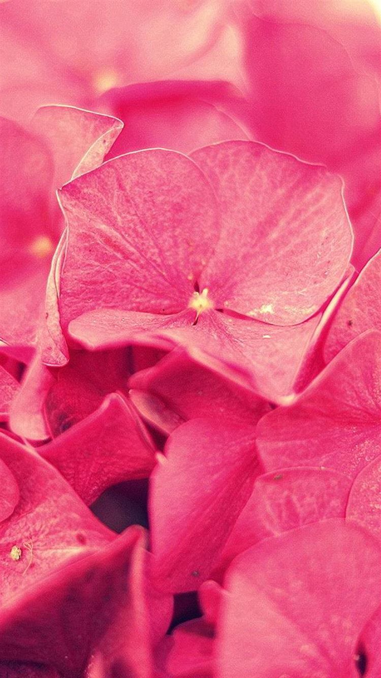 Overlap Flower Petals Iphone 8 Wallpapers Free Download