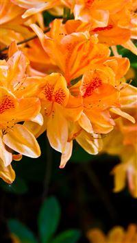 Light Orange Flowers iphone 8 wallpaper ilikewallpaper com 200
