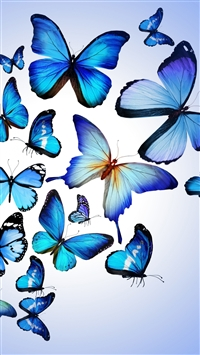 Butterfly Colorful Blue Drawing Art Beautiful iPhone 6(s)~8(s) wallpaper