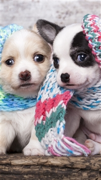 Cute Scarf Puppy Dog Couple iPhone 6(s)~8(s) wallpaper