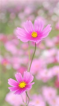 Nature Happy Gesang Flower iPhone 6(s)~8(s) wallpaper