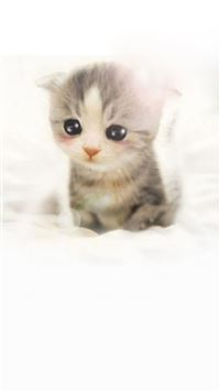 Cute Scottish Fold Kitten iPhone wallpaper