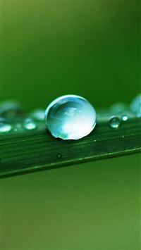 Water Drop Macro Leaf iPhone 6 wallpaper