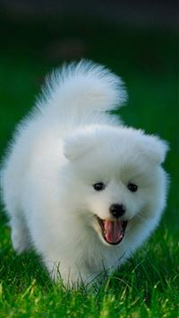 Cute Puppy Running On Grassland iPhone 6(s)~8(s) wallpaper