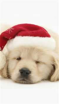 Cute Puppy In Christmas Hat iPhone 6(s)~8(s) wallpaper