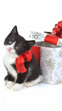 Cute Present Kitten iPhone 6(s)~8(s) wallpaper
