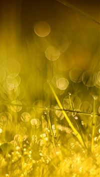 Golden Morning Bokeh iPhone 6(s)~8(s) wallpaper