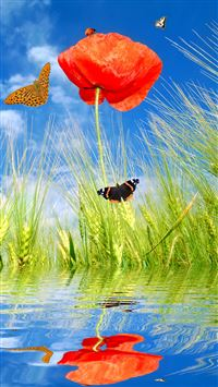 Spring Poppy Flowers And Butterflies iPhone 6(s)~8(s) wallpaper