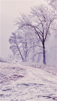 Winter Path Trees Landscape iPhone 6(s)~8(s) wallpaper