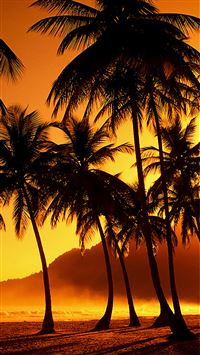 Nature Sunset Beach Coconut Grove  iPhone 6(s)~8(s) wallpaper