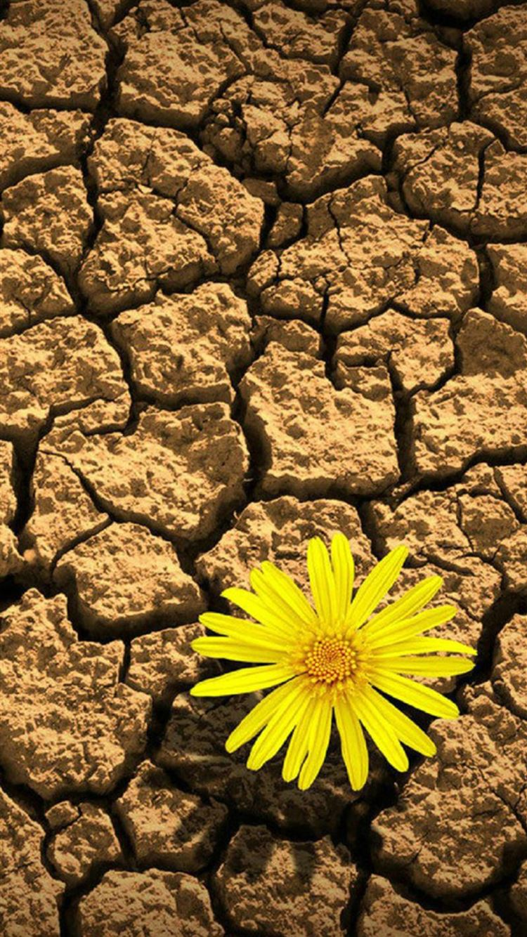 flower daisy on drought iphone 8 wallpaper download | iphone