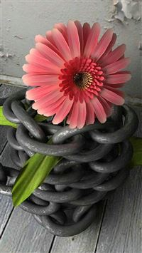 Flower Surrounded Iron Chain iPhone 6(s)~8(s) wallpaper