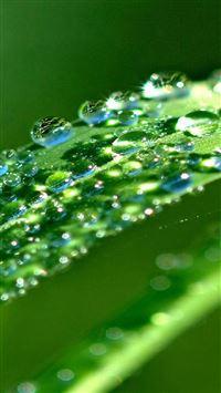 Sunshine Glitter Leaf Dew Waterdrop iPhone wallpaper