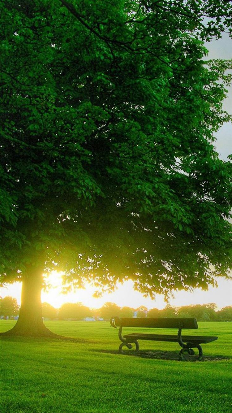 Sunshine Bench Under Big Tree Iphone 8 Wallpapers Free Download