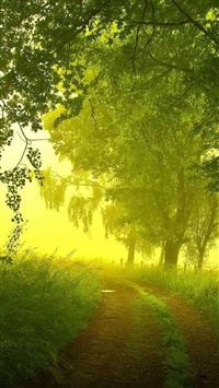 Nature Country Morning Path iPhone 6(s)~8(s) wallpaper