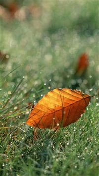 Brown Fall Leaf On Dew Grassland iPhone 6(s)~8(s) wallpaper