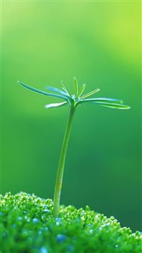 Nature One Green Plant Bud iPhone 6(s)~8(s) wallpaper