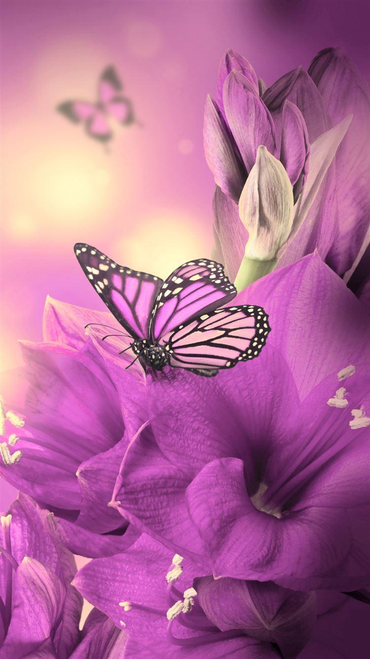 Primula Purple Butterfly iphone 8 wallpaper ilikewallpaper com
