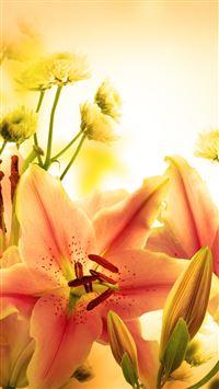 Elegant Orange Lily iPhone wallpaper