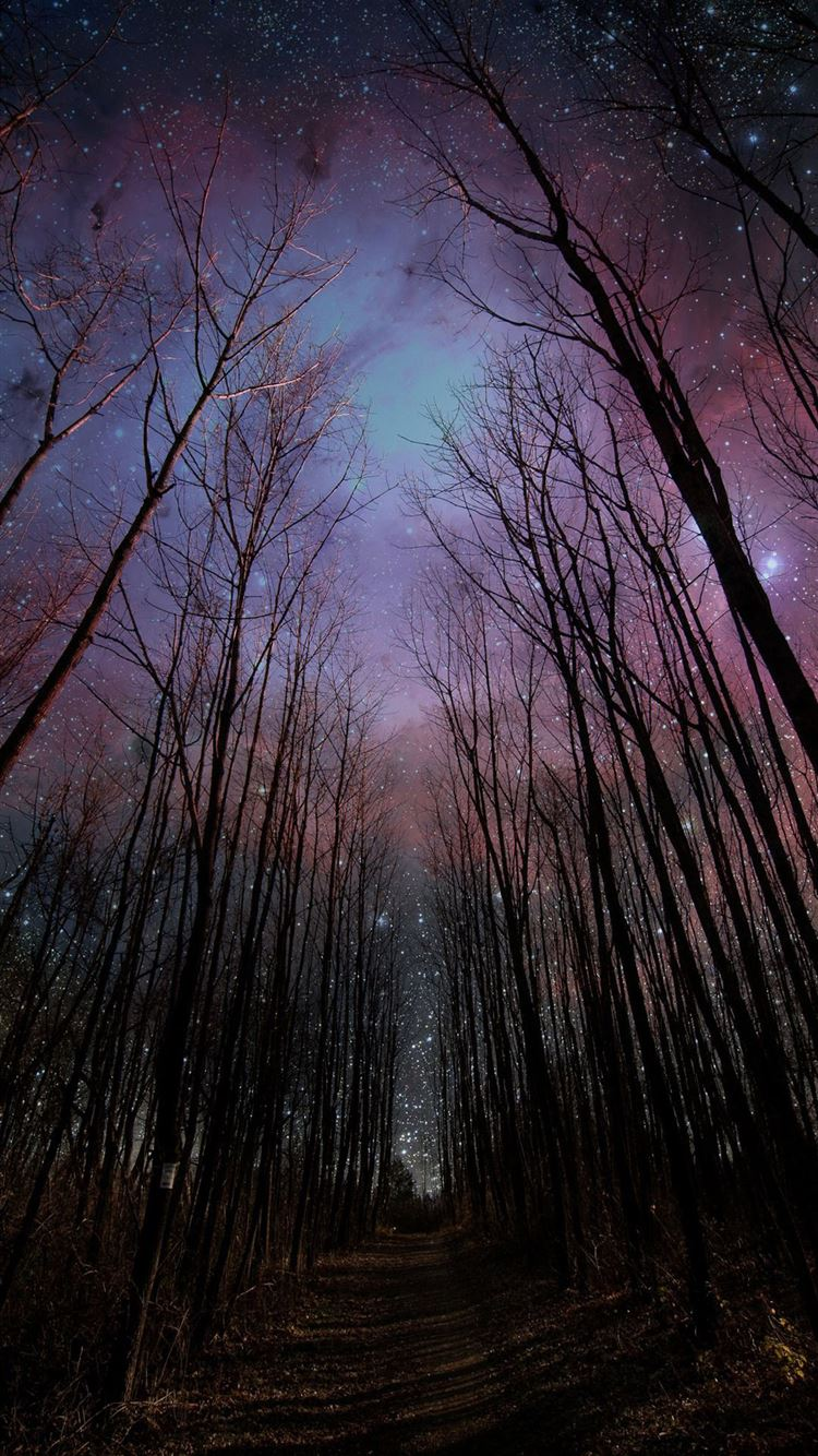 Wither Trees Towards Shiny Starry Sky Iphone 8 Wallpapers