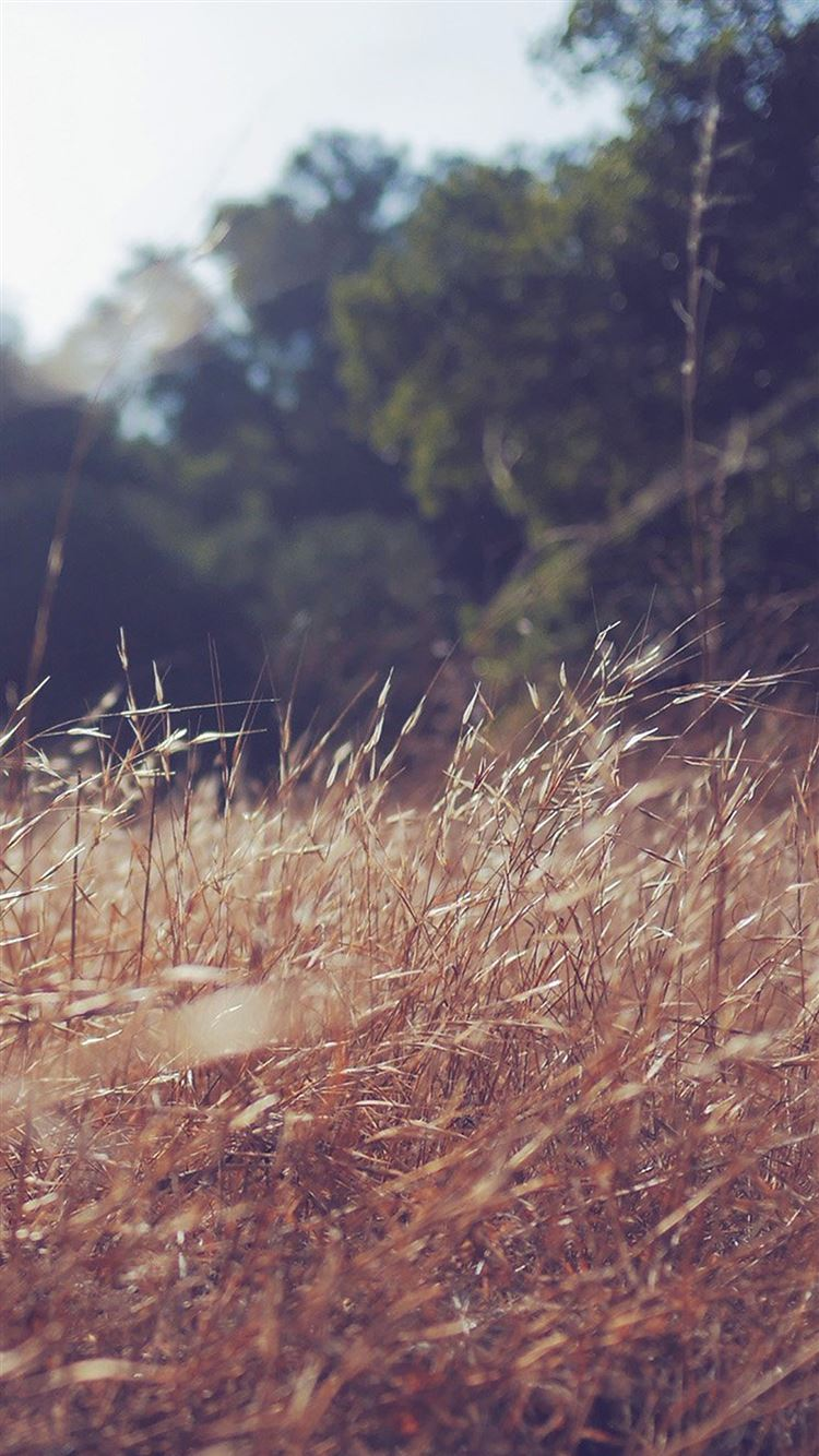 Patrick Cole Nature Grass Field Iphone 8 Wallpapers Free