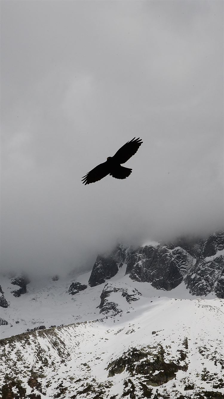 Eagle Flying Over Winter Snow Mountains Iphone 8 Wallpapers