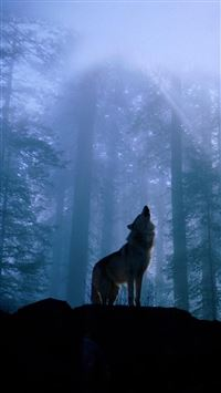 Twilight Foggy Forest Wolf Howl iPhone 6(s)~8(s) wallpaper