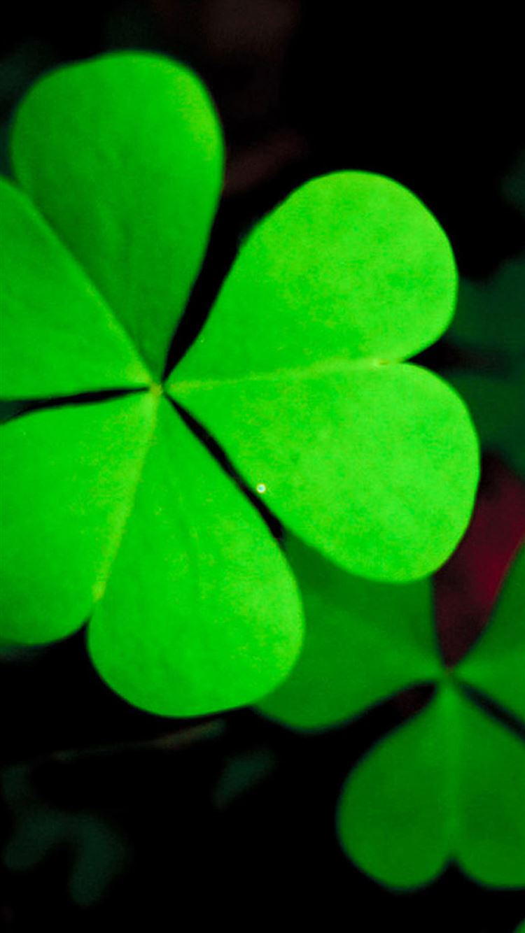 Pure Green Lucky Grass Clover Leaf Close Up Iphone 8 Wallpapers