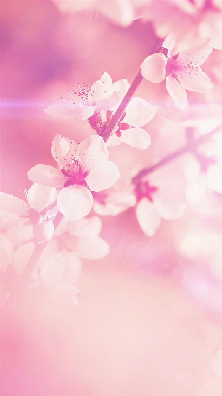 Spring Flower Pink Cherry Blossom Flare Nature Iphone 8
