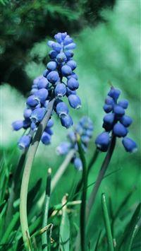 Nature Blue Bud FLower Branch iPhone 6 wallpaper